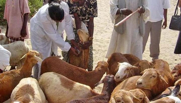 बिहार:लंदन का इंवेस्टमेंट बैंकर अब 'चरा' रहे बकरी, जानिए क्यों वे ऐसा कर रहे