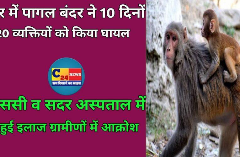 SARAN:मकेर में पागल बंदर ने 10 दिनों में 20 व्यक्तियों को किया घायल,सीएससी व सदर अस्पताल में नहीं हुई इलाज ग्रामीणों में आक्रोश